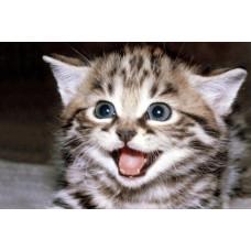 Кот троянский